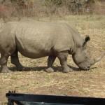 Op safari tussen de beesjes
