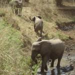 Nog meer beestjes op safari